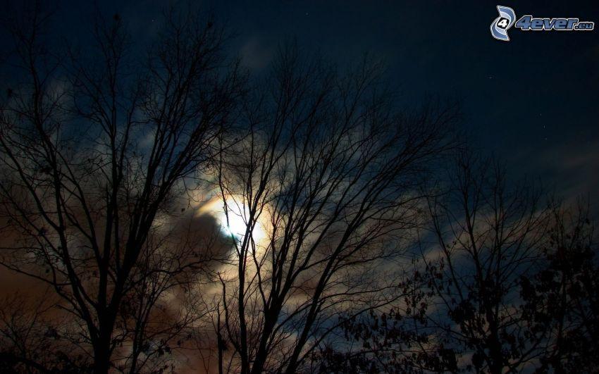 natt, måne, träd