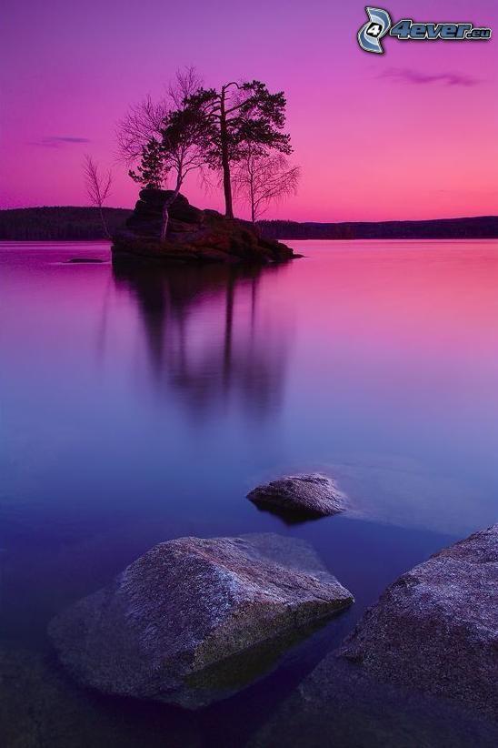 ö, träd, sjö, stenbumlingar, lila himmel