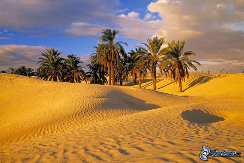 öken, palmer, moln