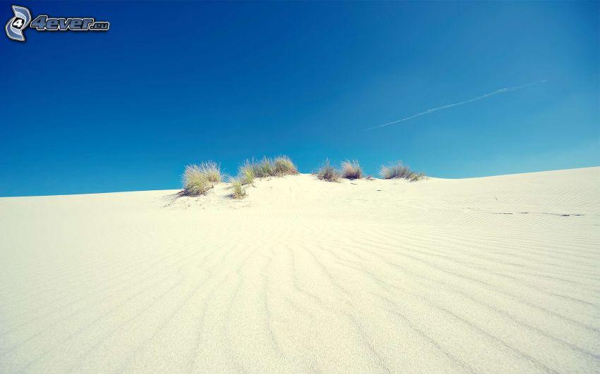 öken, sand, växter, blå himmel