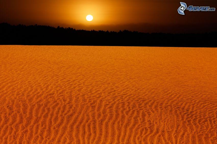 öken, solnedgång, silhuett av skog