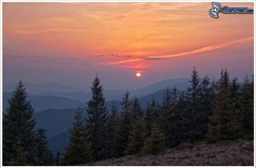 orange solnedgång, barrträd, kullar