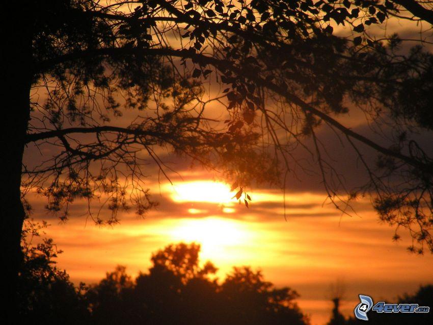 orange solnedgång, kvällshimmel, siluetter av träd