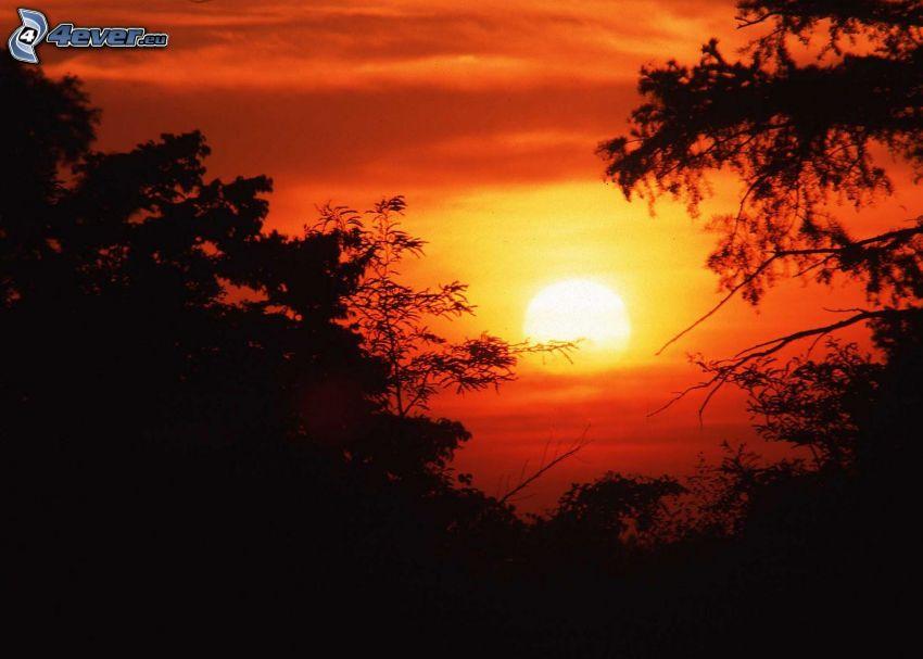 orange solnedgång, silhuett av skog