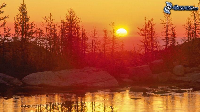orange solnedgång, sjö, träd