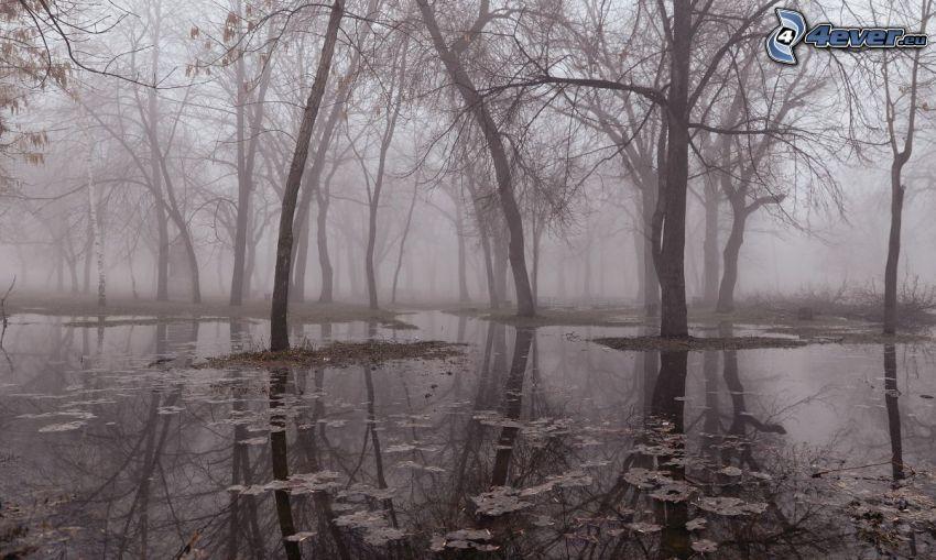 översvämning, skog, dimma