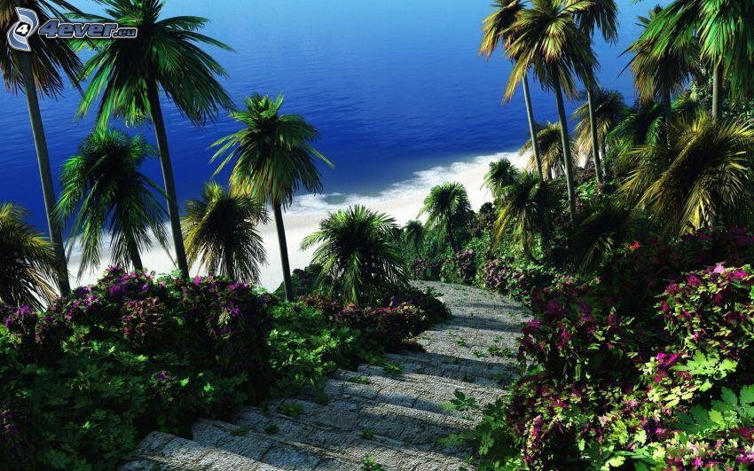 palmer, kust, tropiskt hav