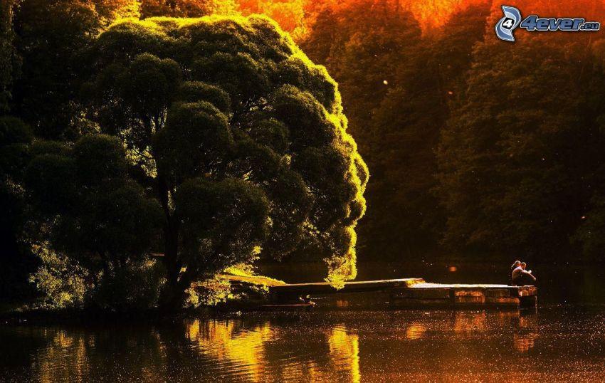 par vid sjö, stort träd, träbrygga