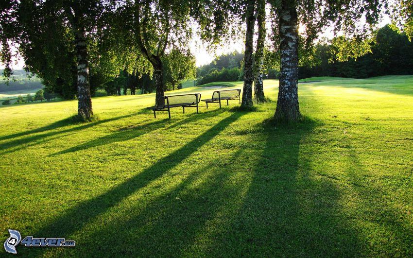 park, björkar, bänkar, gräsmatta