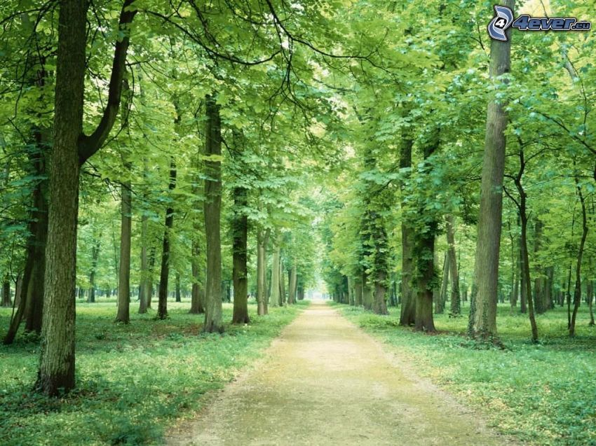 park, trottoar, träd