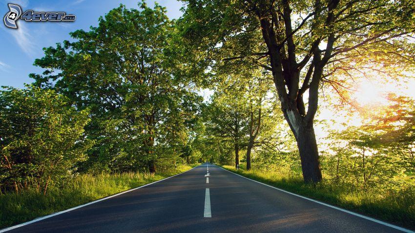 rak väg, solnedgång bakom träd, gröna träd, spretigt träd, träd vid vägen