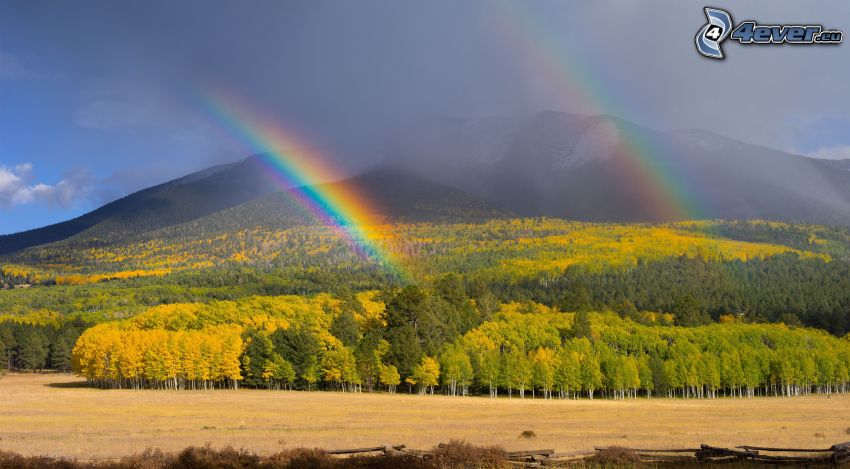 regnbåge, färggrann skog, kulle