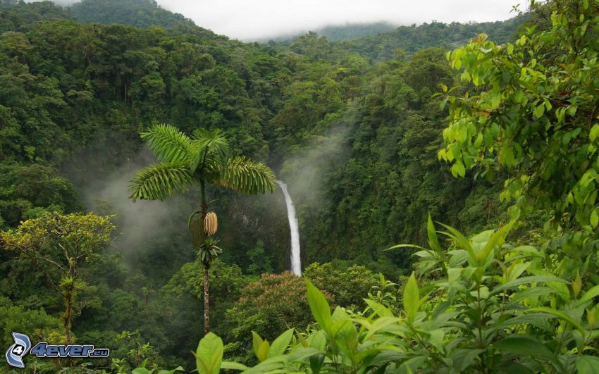 regnskog, grönska, vattenfall, djungel