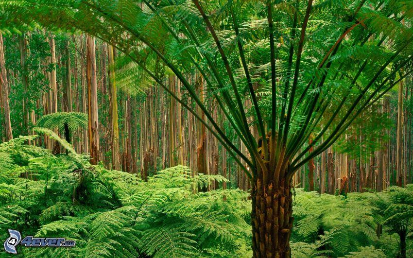 regnskog, ormbunke