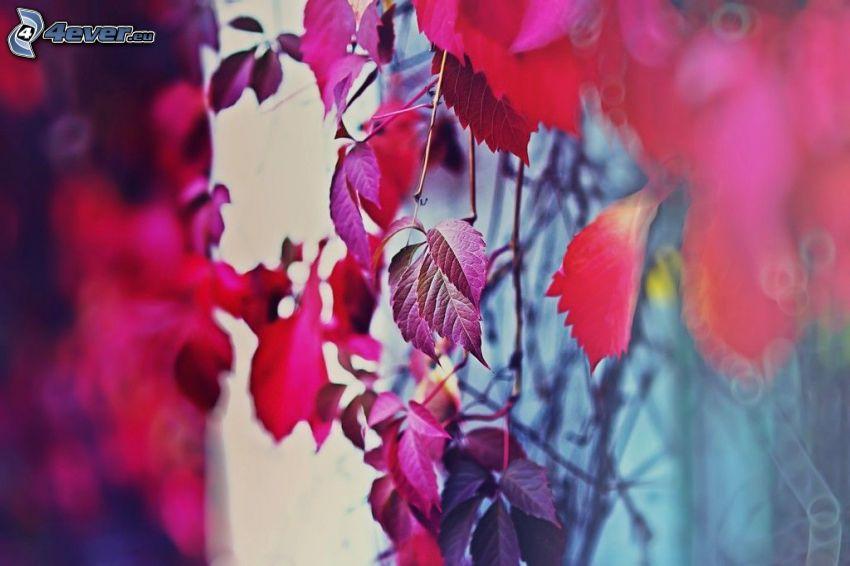 röda blad