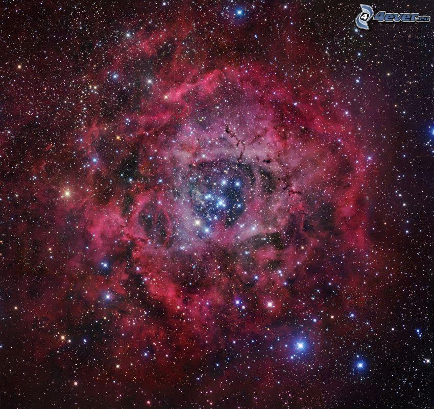 Rosettnebulosan, stjärnor
