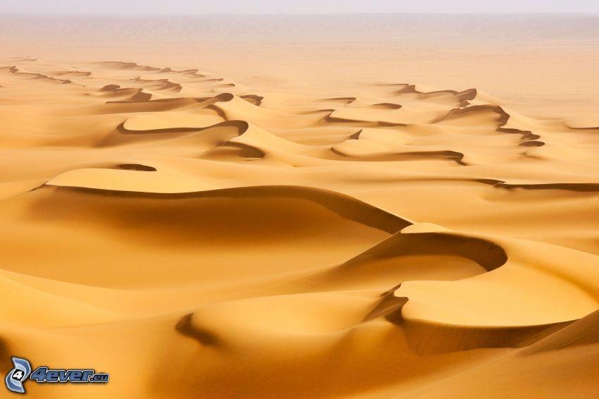 sanddyner, öken