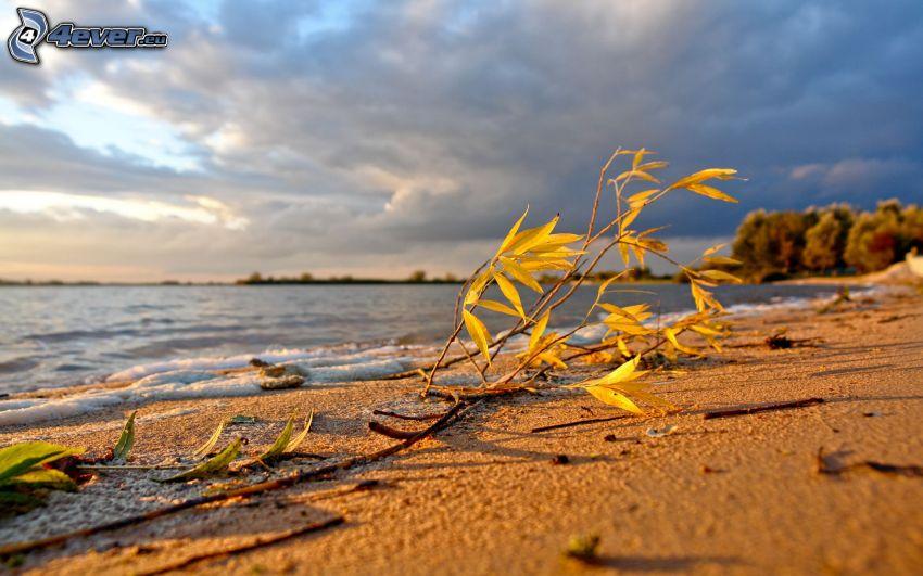 sandstrand, kvist, gula löv, sjö