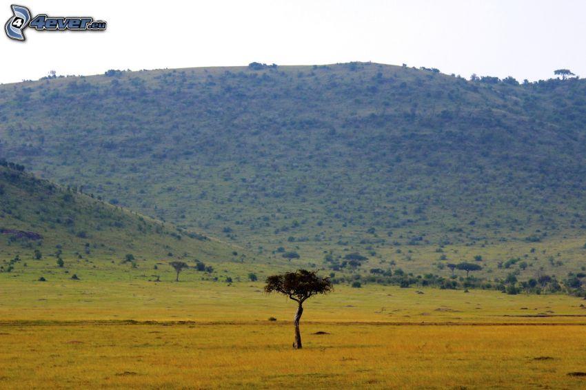 savann, ensamt träd, bergskedja