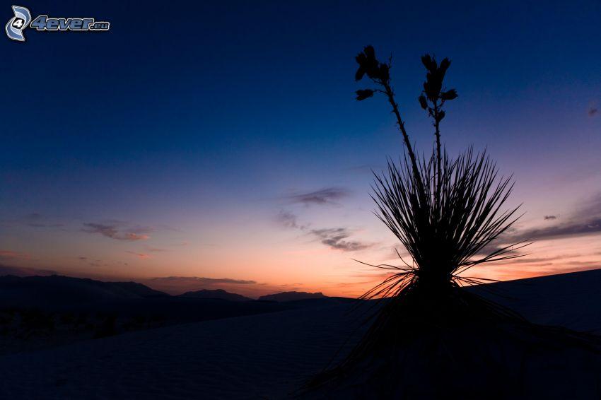 silhuett av växt, horisont, kvällshimmel