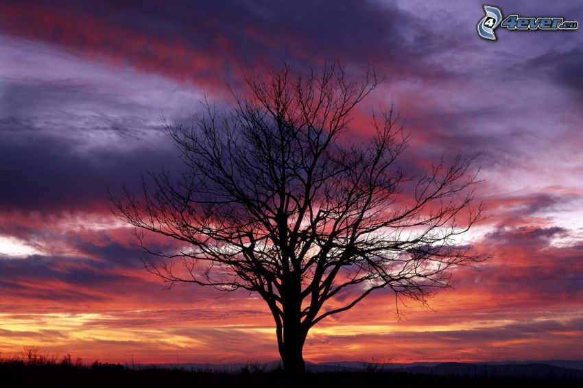 siluett av ett träd, lila himmel