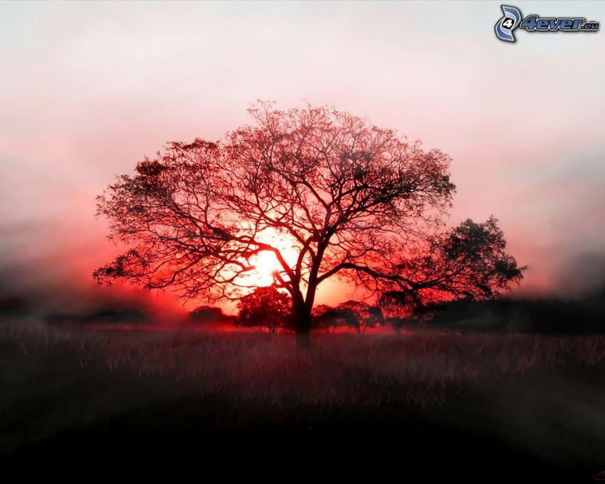 siluett av ett träd, solnedgång bakom träd