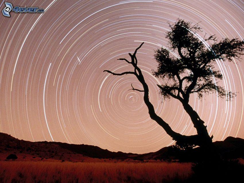 siluett av ett träd, stjärnhimmel, bergskedja, Jordens rotation