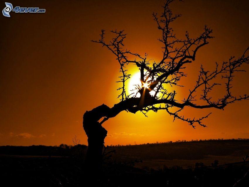 siluett av ett träd, uttorkade träd, solnedgång bakom träd, orange solnedgång