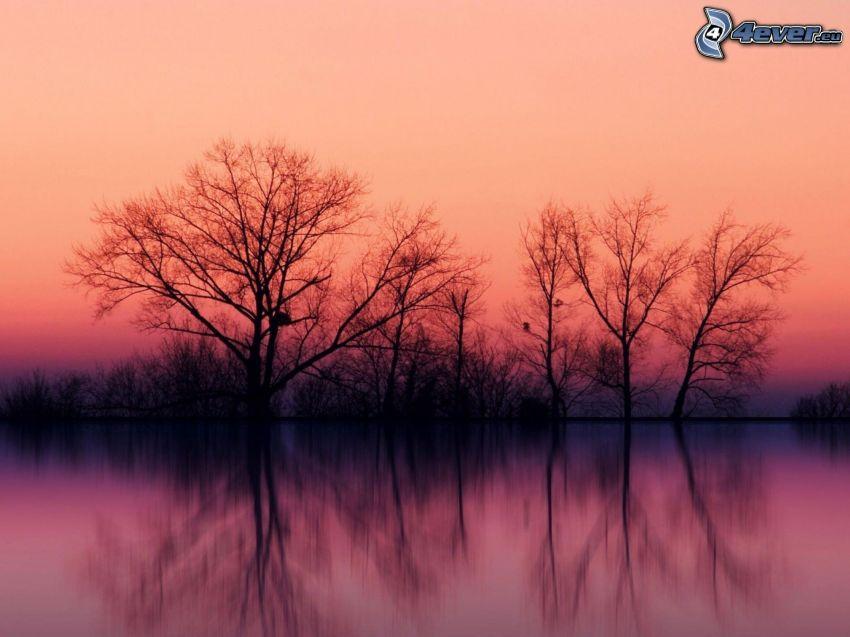 siluetter av träd, lila himmel, sjö