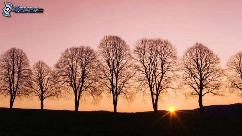 siluetter av träd, solnedgång, rosa himmel