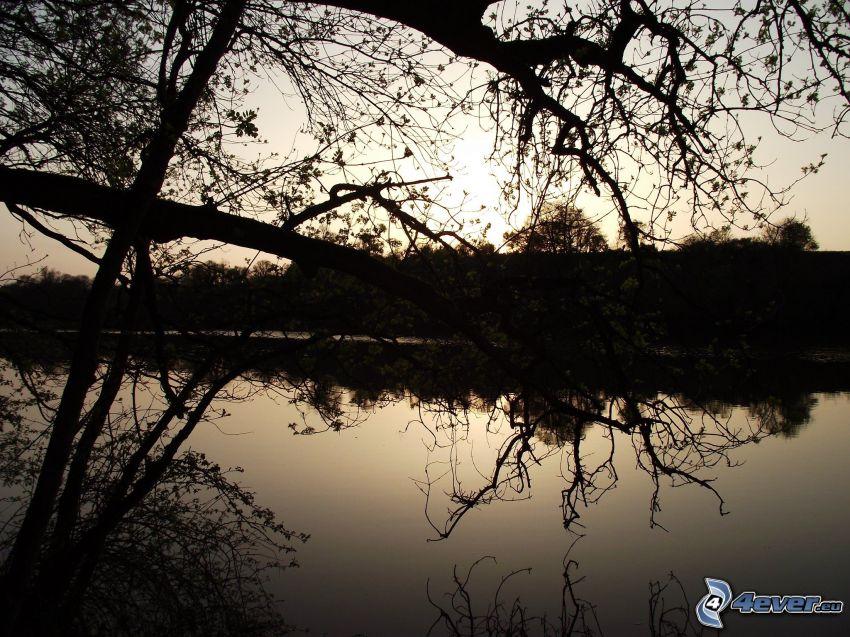 siluetter av träd, solnedgång över flod