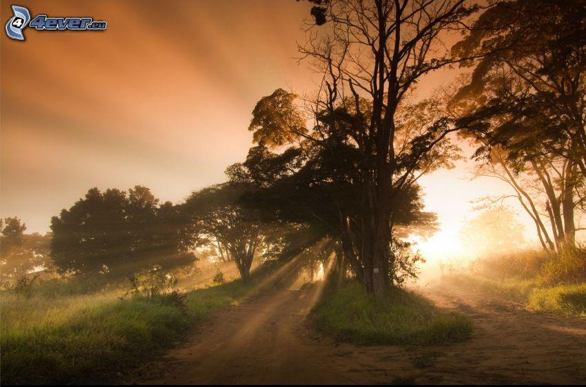 siluetter av träd, solstrålar