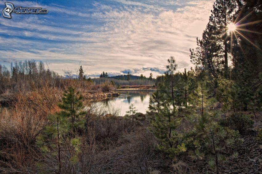 sjö, barrträd, solstrålar, HDR