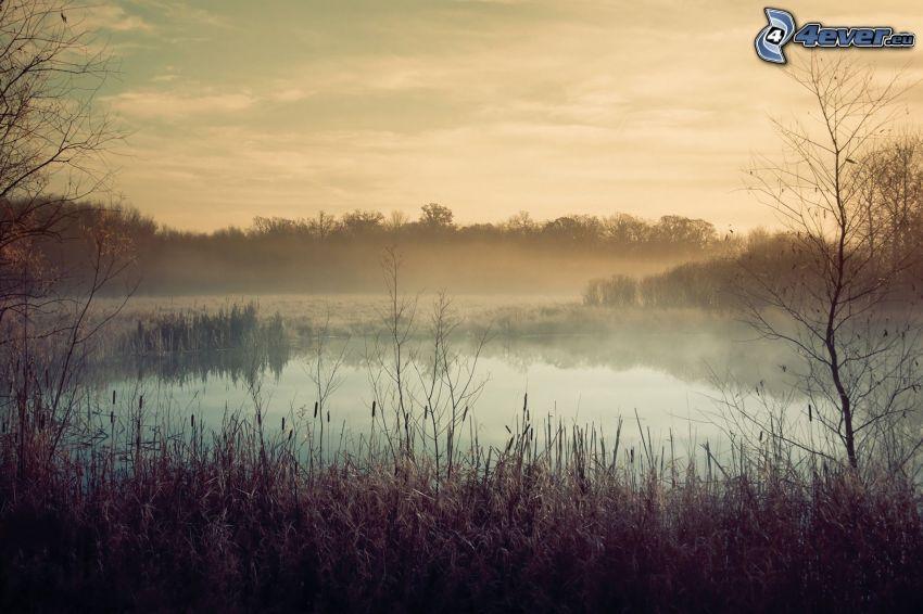 sjö, dimma