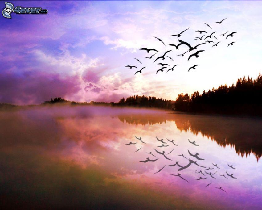 sjö, fåglar, flyg, spegling