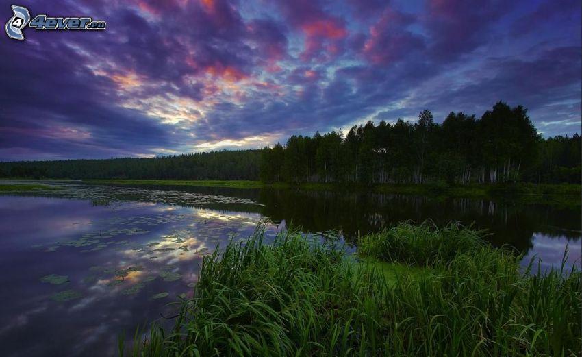 sjö, grönska, näckrosor, efter solnedgången