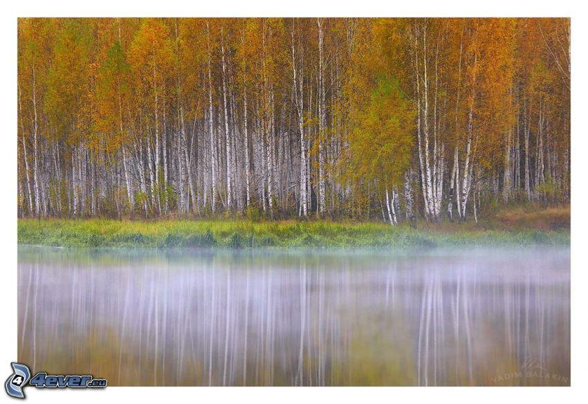 sjö, markdimma, gula träd, björkar