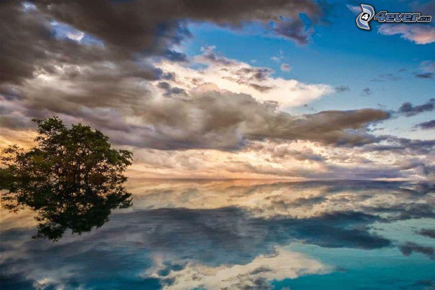 sjö, moln, träd, spegling, soluppgång