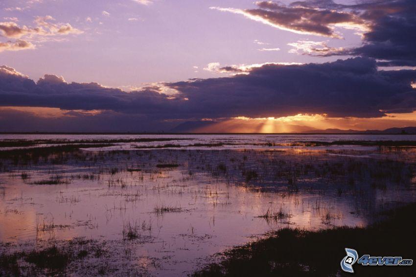 sjö, moln, träsk