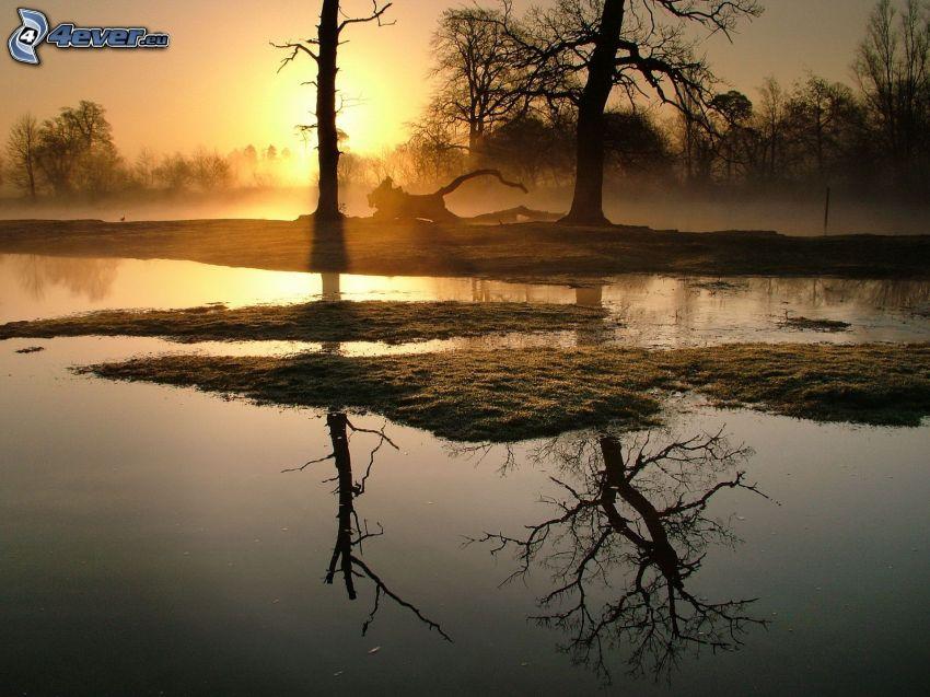 sjö, siluetter av träd, solnedgång