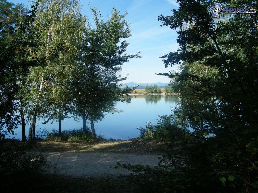 sjö, skog, skogsväg, stilleben