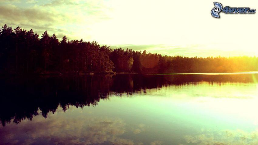 sjö, skog, soluppgång