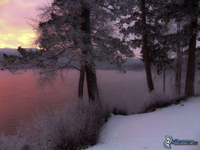 sjö, snöklädda träd
