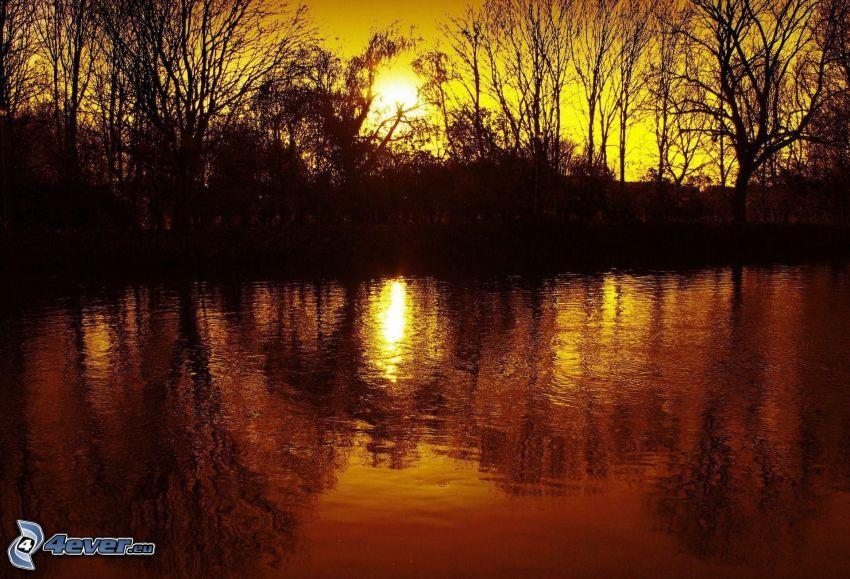 sjö, solnedgång, siluetter av träd