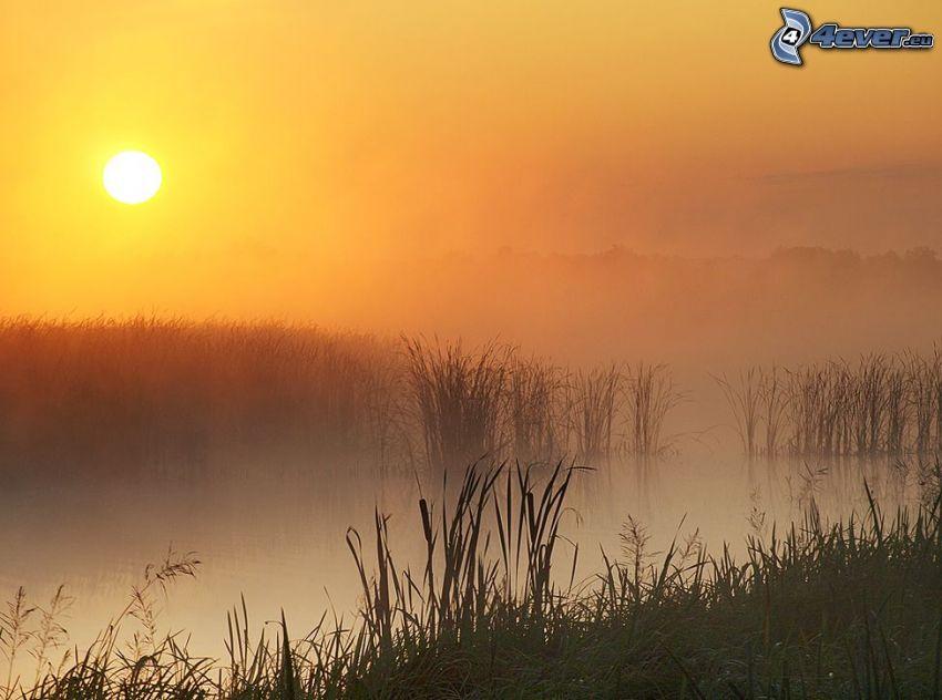 sjö, soluppgång, markdimma, grönska