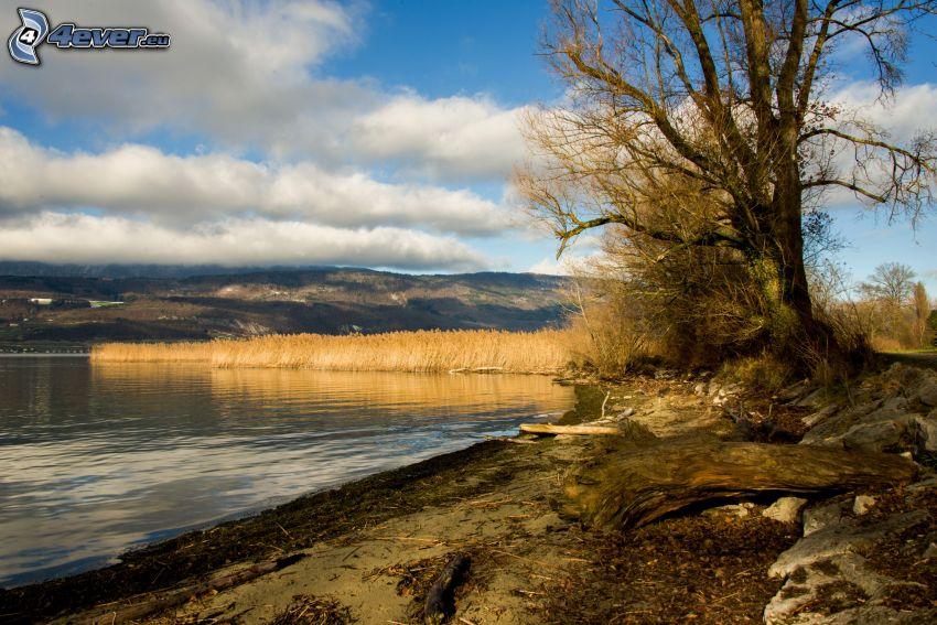 sjö, strand, träd, bergskedja