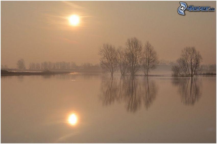 sjö, svag sol, träd