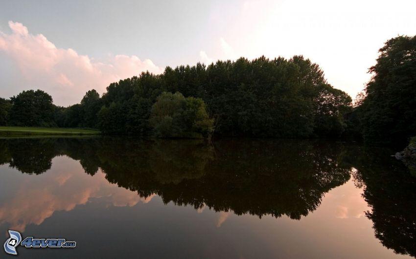 sjö, träd, lugn vattenyta, spegling