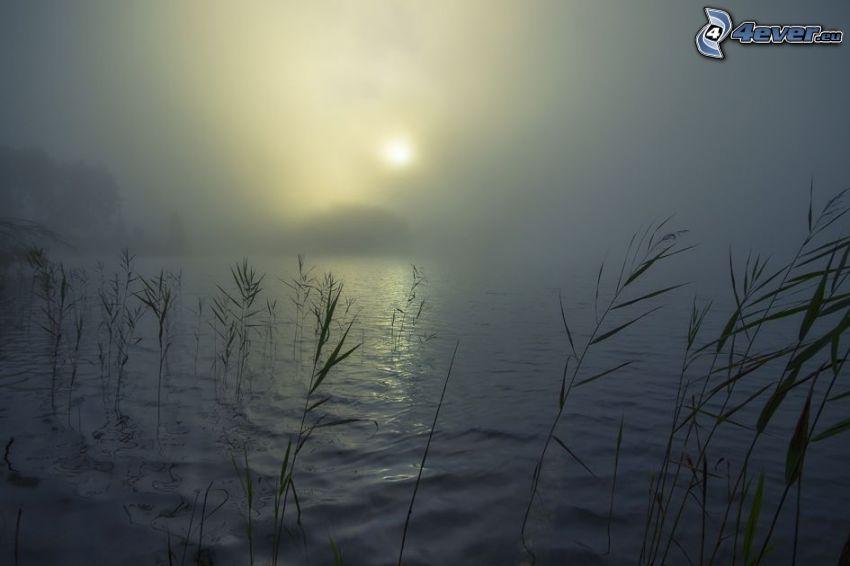 sjö, växter, dimma, svag sol