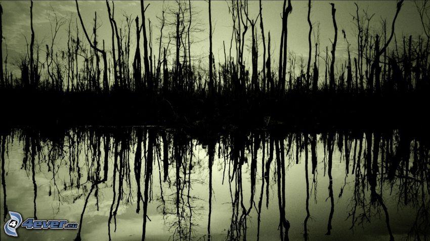sjö i skogen, döda träd, spegling